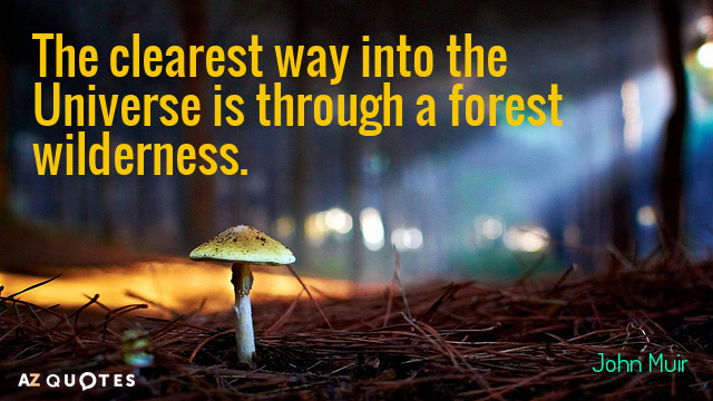 John Muir quote: The clearest way into the Universe is through a forest wilderness.