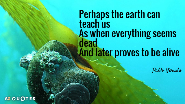 Pablo Neruda quote: Perhaps the earth can teach us