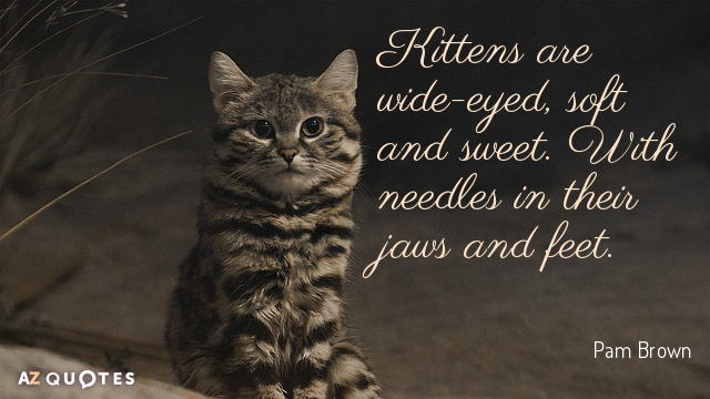 Pam Brown quote: Kittens are wide-eyed, soft and sweet. With needles in their jaws and feet.