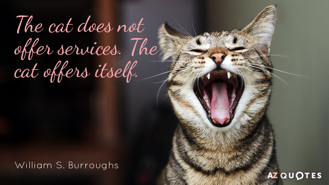 Cat Quotes Amazing William S Burroughs Quotes About Cats AZ Quotes