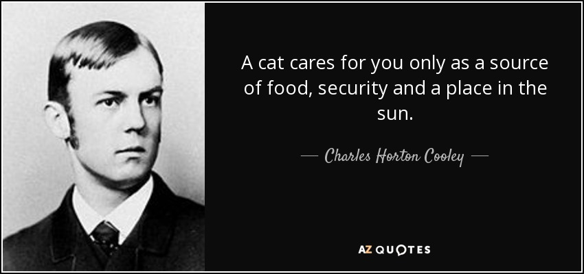 A cat cares for you only as a source of food, security and a place in the sun. - Charles Horton Cooley