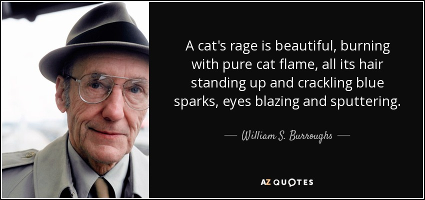 A cat's rage is beautiful, burning with pure cat flame, all its hair standing up and crackling blue sparks, eyes blazing and sputtering. - William S. Burroughs