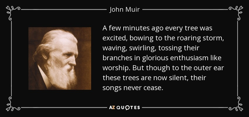 A few minutes ago every tree was excited, bowing to the roaring storm, waving, swirling, tossing their branches in glorious enthusiasm like worship. But though to the outer ear these trees are now silent, their songs never cease. - John Muir