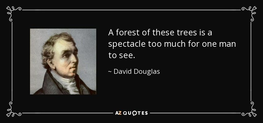 A forest of these trees is a spectacle too much for one man to see. - David Douglas