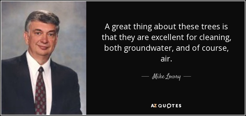 A great thing about these trees is that they are excellent for cleaning, both groundwater, and of course, air. - Mike Lowry