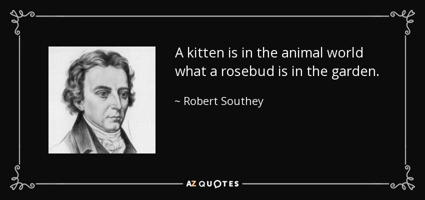 A kitten is in the animal world what a rosebud is in the garden. - Robert Southey