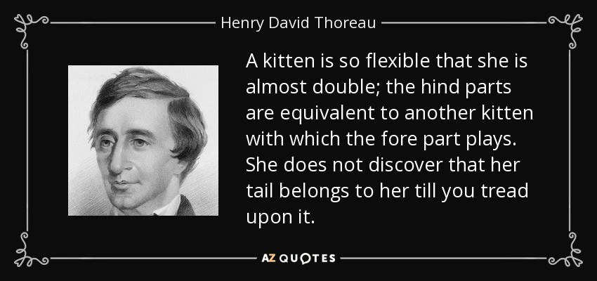 A kitten is so flexible that she is almost double; the hind parts are equivalent to another kitten with which the fore part plays. She does not discover that her tail belongs to her till you tread upon it. - Henry David Thoreau
