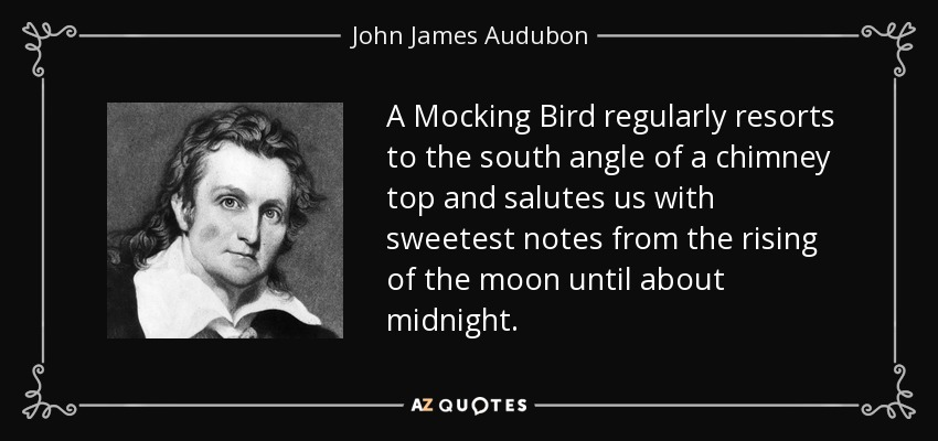 A Mocking Bird regularly resorts to the south angle of a chimney top and salutes us with sweetest notes from the rising of the moon until about midnight. - John James Audubon