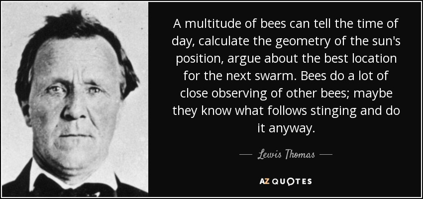 A multitude of bees can tell the time of day, calculate the geometry of the sun's position, argue about the best location for the next swarm. Bees do a lot of close observing of other bees; maybe they know what follows stinging and do it anyway. - Lewis Thomas