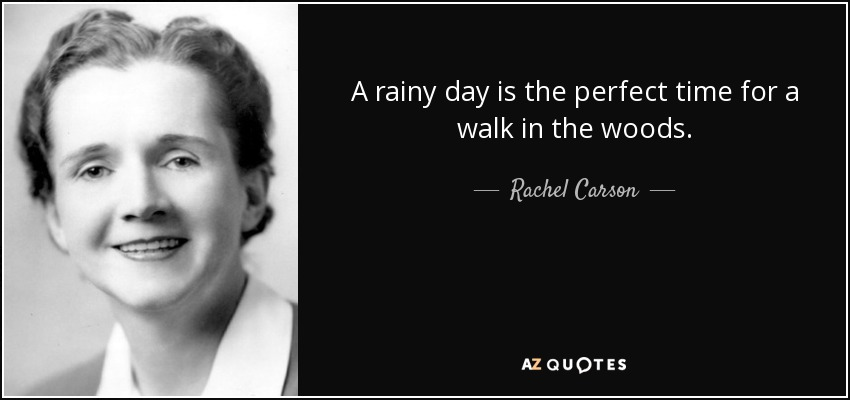 A rainy day is the perfect time for a walk in the woods. - Rachel Carson