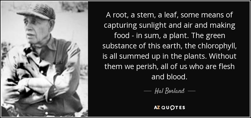 A root, a stem, a leaf, some means of capturing sunlight and air and making food - in sum, a plant. The green substance of this earth, the chlorophyll, is all summed up in the plants. Without them we perish, all of us who are flesh and blood. - Hal Borland