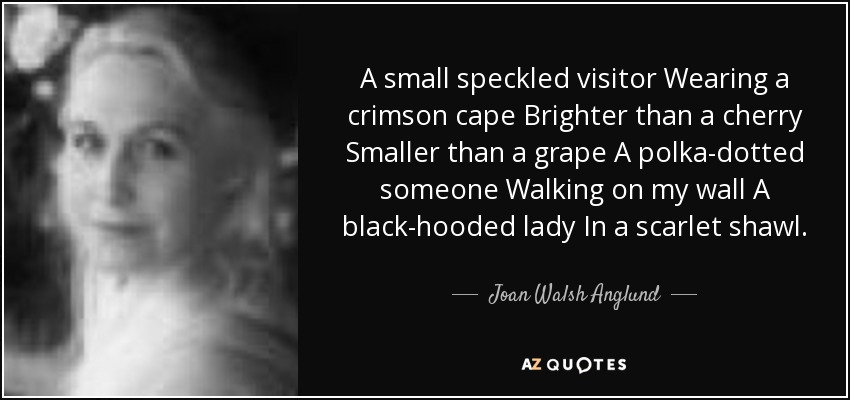 A small speckled visitor Wearing a crimson cape Brighter than a cherry Smaller than a grape A polka-dotted someone Walking on my wall A black-hooded lady In a scarlet shawl. - Joan Walsh Anglund