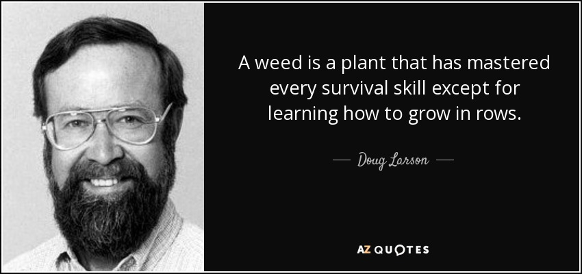 A weed is a plant that has mastered every survival skill except for learning how to grow in rows. - Doug Larson