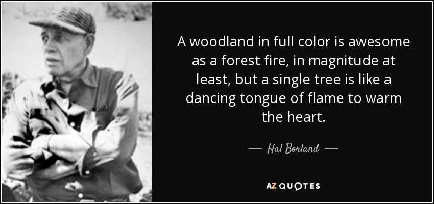 A woodland in full color is awesome as a forest fire, in magnitude at least, but a single tree is like a dancing tongue of flame to warm the heart. - Hal Borland