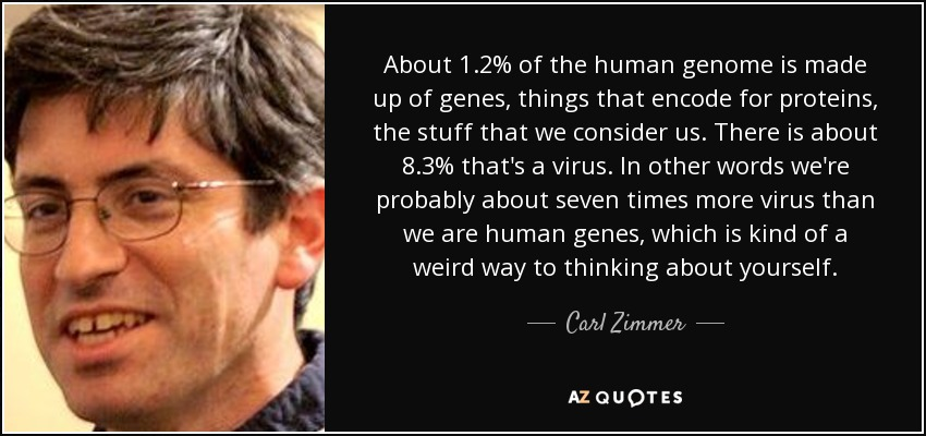 About 1.2% of the human genome is made up of genes, things that encode for proteins, the stuff that we consider us. There is about 8.3% that's a virus. In other words we're probably about seven times more virus than we are human genes, which is kind of a weird way to thinking about yourself. - Carl Zimmer