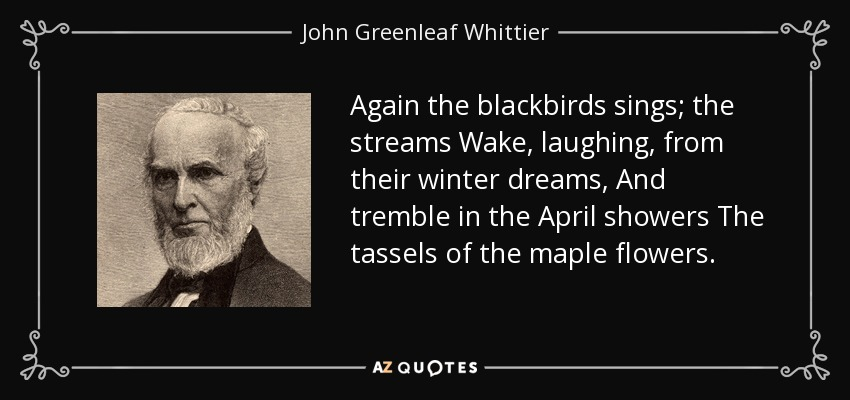 Again the blackbirds sings; the streams Wake, laughing, from their winter dreams, And tremble in the April showers The tassels of the maple flowers. - John Greenleaf Whittier