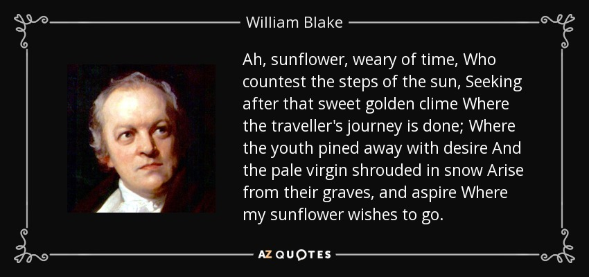 Ah, sunflower, weary of time, Who countest the steps of the sun, Seeking after that sweet golden clime Where the traveller's journey is done; Where the youth pined away with desire And the pale virgin shrouded in snow Arise from their graves, and aspire Where my sunflower wishes to go. - William Blake