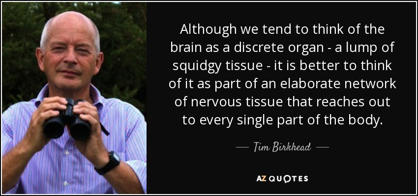 Although we tend to think of the brain as a discrete organ - a lump of squidgy tissue - it is better to think of it as part of an elaborate network of nervous tissue that reaches out to every single part of the body. - Tim Birkhead