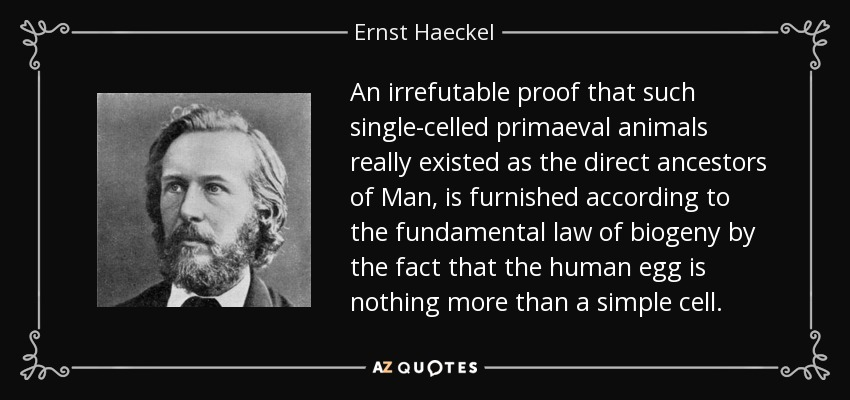 An irrefutable proof that such single-celled primaeval animals really existed as the direct ancestors of Man, is furnished according to the fundamental law of biogeny by the fact that the human egg is nothing more than a simple cell. - Ernst Haeckel