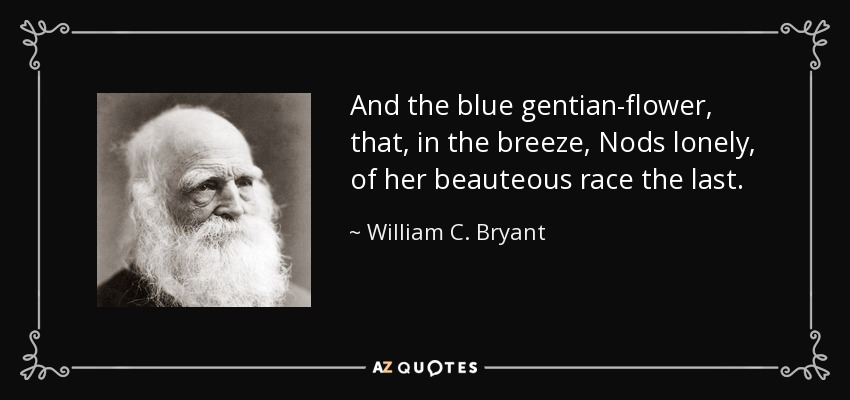 william c bryant quote and the blue gentian flower that in the