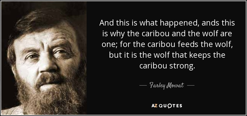 And this is what happened, ands this is why the caribou and the wolf are one; for the caribou feeds the wolf, but it is the wolf that keeps the caribou strong. - Farley Mowat
