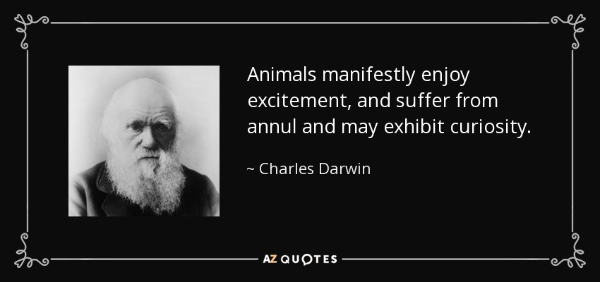 Animals manifestly enjoy excitement, and suffer from annul and may exhibit curiosity. - Charles Darwin