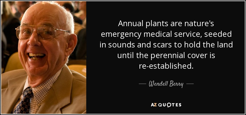 Annual plants are nature's emergency medical service, seeded in sounds and scars to hold the land until the perennial cover is re-established. - Wendell Berry