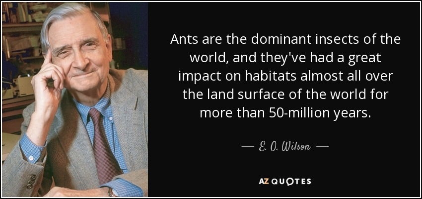 Ants are the dominant insects of the world, and they've had a great impact on habitats almost all over the land surface of the world for more than 50-million years. - E. O. Wilson