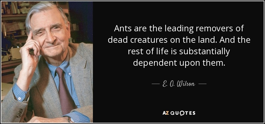 Ants are the leading removers of dead creatures on the land. And the rest of life is substantially dependent upon them. - E. O. Wilson