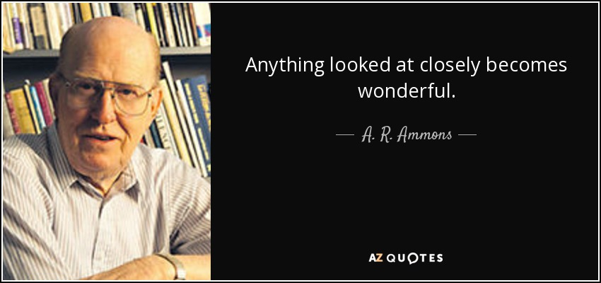 Anything looked at closely becomes wonderful. - A. R. Ammons