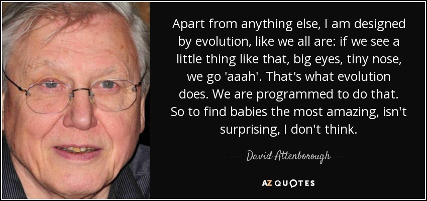 Apart from anything else, I am designed by evolution, like we all are: if we see a little thing like that, big eyes, tiny nose, we go 'aaah'. That's what evolution does. We are programmed to do that. So to find babies the most amazing, isn't surprising, I don't think. - David Attenborough