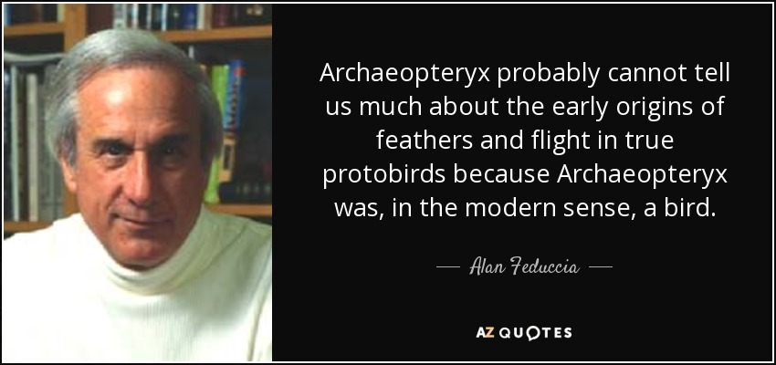 Archaeopteryx probably cannot tell us much about the early origins of feathers and flight in true protobirds because Archaeopteryx was, in the modern sense, a bird. - Alan Feduccia