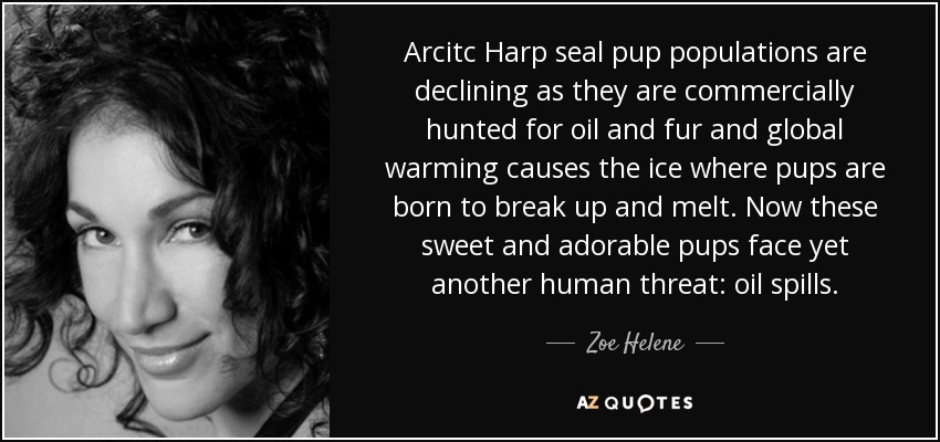 Arcitc Harp seal pup populations are declining as they are commercially hunted for oil and fur and global warming causes the ice where pups are born to break up and melt. Now these sweet and adorable pups face yet another human threat: oil spills. - Zoe Helene