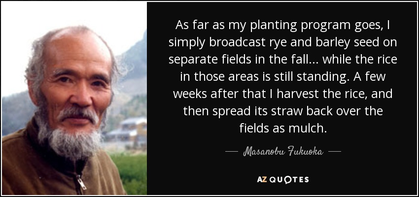As far as my planting program goes, I simply broadcast rye and barley seed on separate fields in the fall . . . while the rice in those areas is still standing. A few weeks after that I harvest the rice, and then spread its straw back over the fields as mulch. - Masanobu Fukuoka