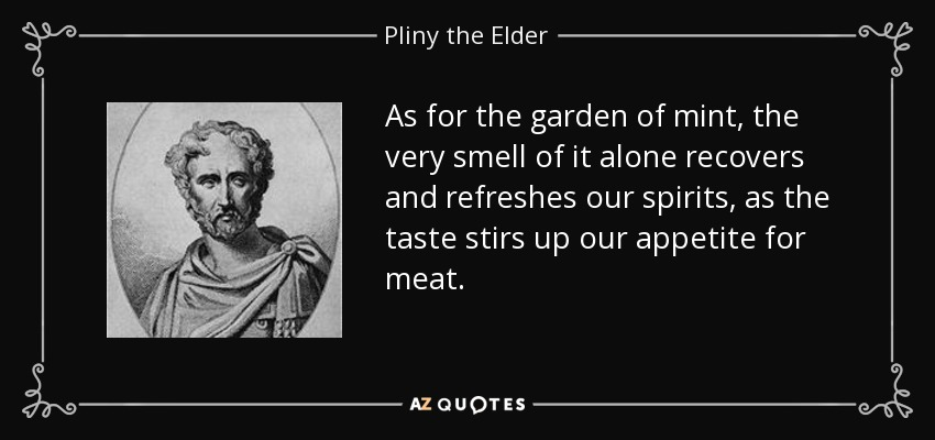 As for the garden of mint, the very smell of it alone recovers and refreshes our spirits, as the taste stirs up our appetite for meat. - Pliny the Elder