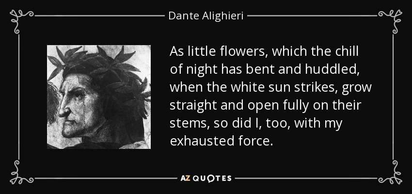As little flowers, which the chill of night has bent and huddled, when the white sun strikes, grow straight and open fully on their stems, so did I, too, with my exhausted force. - Dante Alighieri