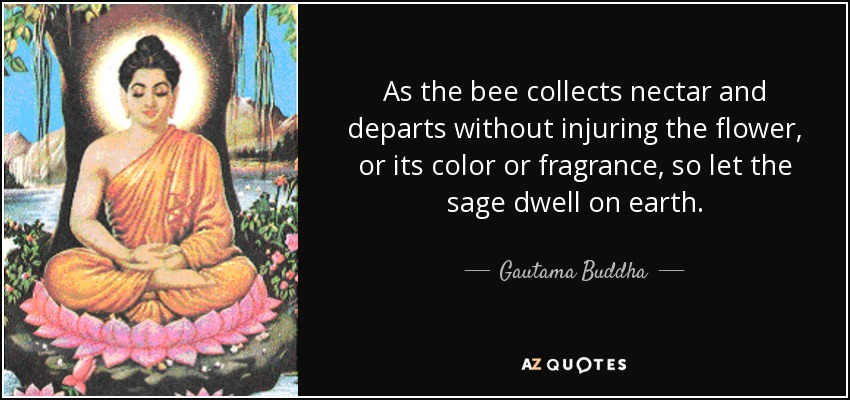As the bee collects nectar and departs without injuring the flower, or its color or fragrance, so let the sage dwell on earth. - Gautama Buddha