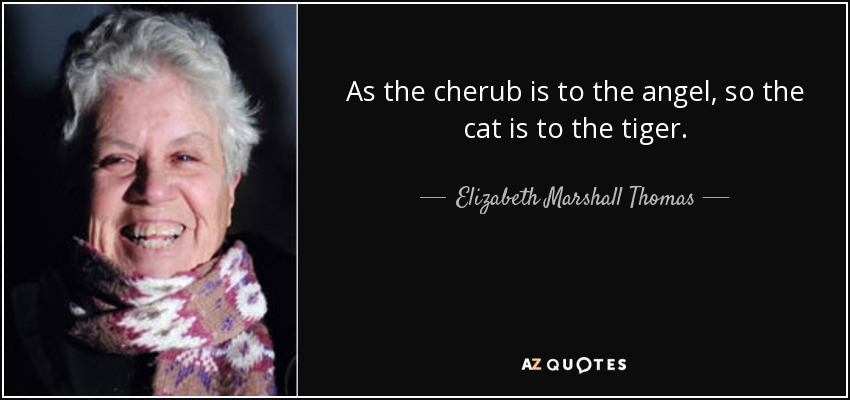 As the cherub is to the angel, so the cat is to the tiger. - Elizabeth Marshall Thomas