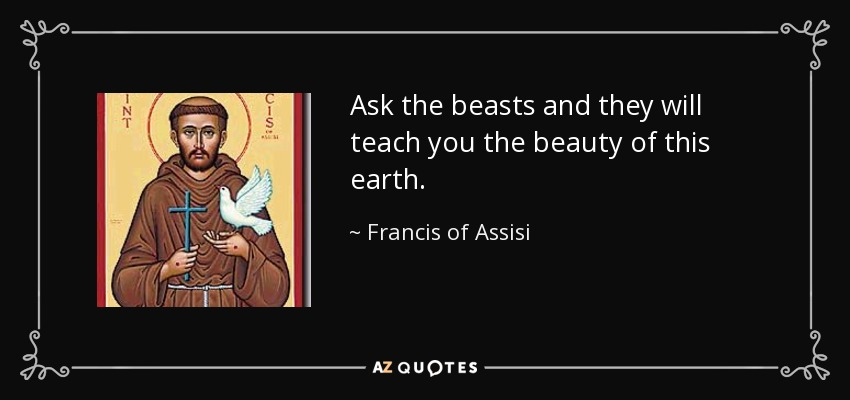 Ask the beasts and they will teach you the beauty of this earth. - Francis of Assisi