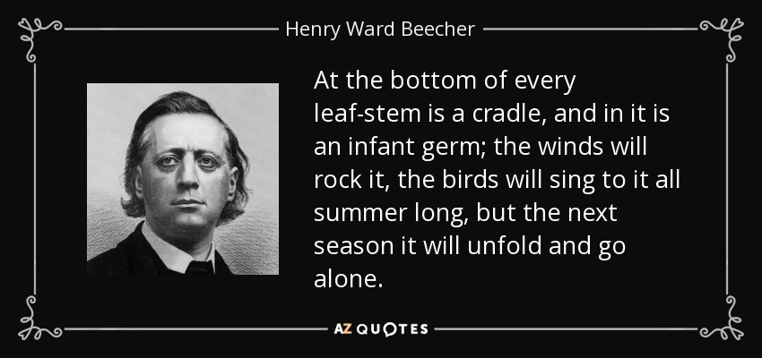 At the bottom of every leaf-stem is a cradle, and in it is an infant germ; the winds will rock it, the birds will sing to it all summer long, but the next season it will unfold and go alone. - Henry Ward Beecher