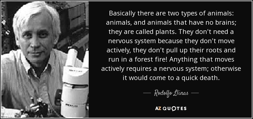 Basically there are two types of animals: animals, and animals that have no brains; they are called plants. They don't need a nervous system because they don't move actively, they don't pull up their roots and run in a forest fire! Anything that moves actively requires a nervous system; otherwise it would come to a quick death. - Rodolfo Llinas