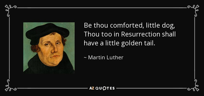 Be thou comforted, little dog, Thou too in Resurrection shall have a little golden tail. - Martin Luther