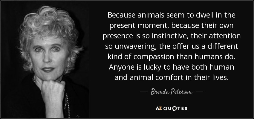 Because animals seem to dwell in the present moment, because their own presence is so instinctive, their attention so unwavering, the offer us a different kind of compassion than humans do. Anyone is lucky to have both human and animal comfort in their lives. - Brenda Peterson
