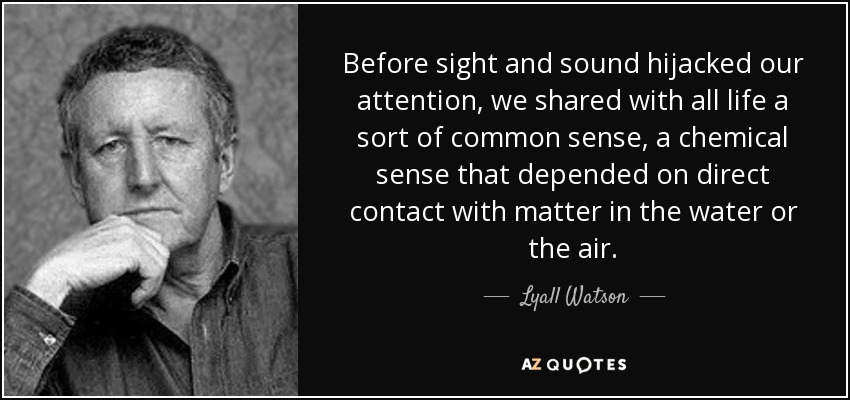 Before sight and sound hijacked our attention, we shared with all life a sort of common sense, a chemical sense that depended on direct contact with matter in the water or the air. - Lyall Watson