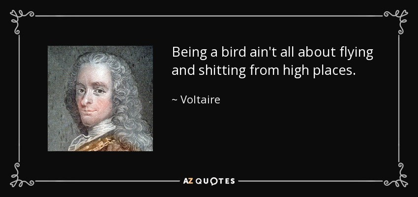 Being a bird ain't all about flying and shitting from high places. - Voltaire