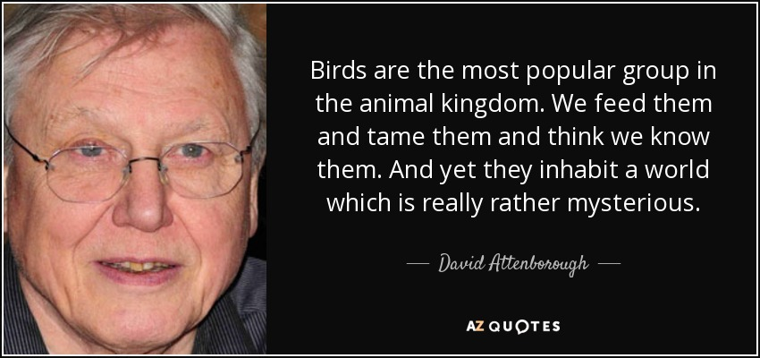 Birds are the most popular group in the animal kingdom. We feed them and tame them and think we know them. And yet they inhabit a world which is really rather mysterious. - David Attenborough