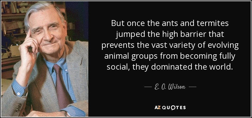 But once the ants and termites jumped the high barrier that prevents the vast variety of evolving animal groups from becoming fully social, they dominated the world. - E. O. Wilson