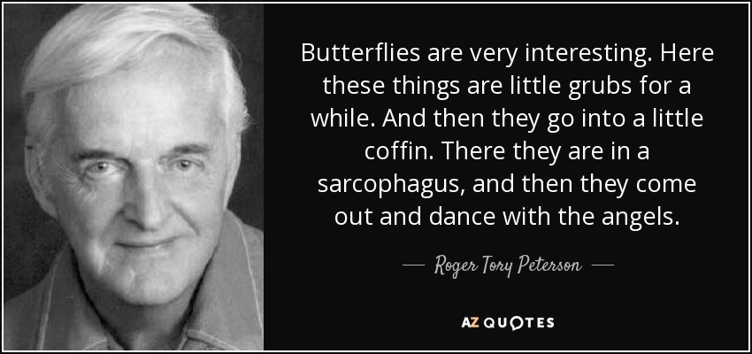 Roger Tory Peterson Quote Butterflies Are Very Interesting Here