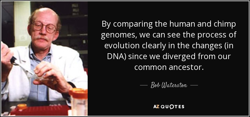 By comparing the human and chimp genomes, we can see the process of evolution clearly in the changes (in DNA) since we diverged from our common ancestor. - Bob Waterston