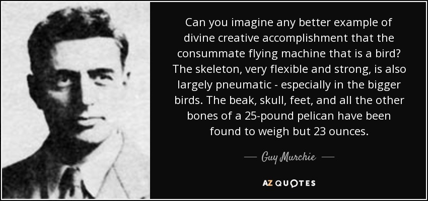 Can you imagine any better example of divine creative accomplishment that the consummate flying machine that is a bird? The skeleton, very flexible and strong, is also largely pneumatic - especially in the bigger birds. The beak, skull, feet, and all the other bones of a 25-pound pelican have been found to weigh but 23 ounces. - Guy Murchie